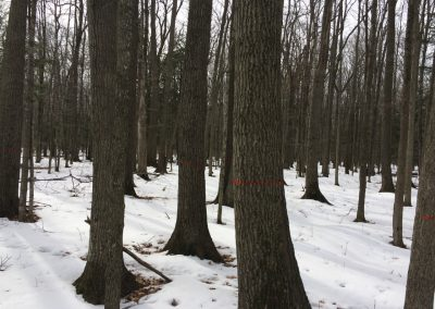 Woods - log procurement page-1280